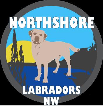 Northshore Labradors NW